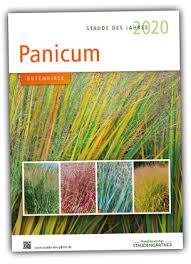 Panicum